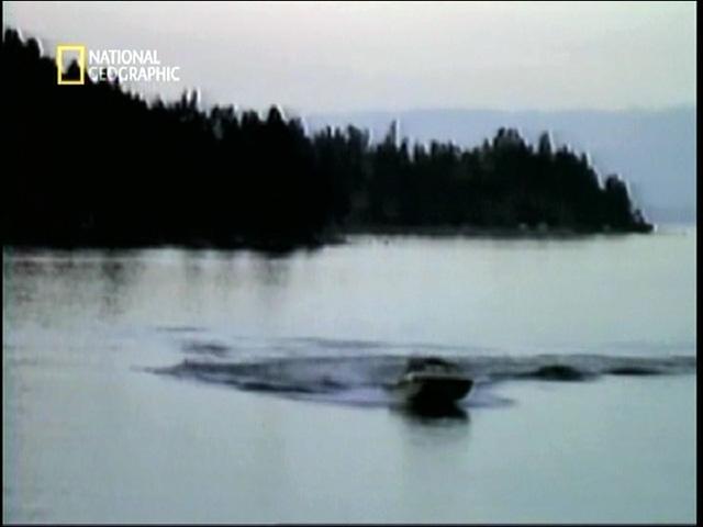 水上スキーヤーが旋回に失敗……