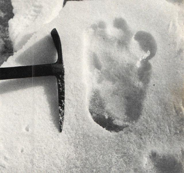 シプトンが撮影した足跡写真。