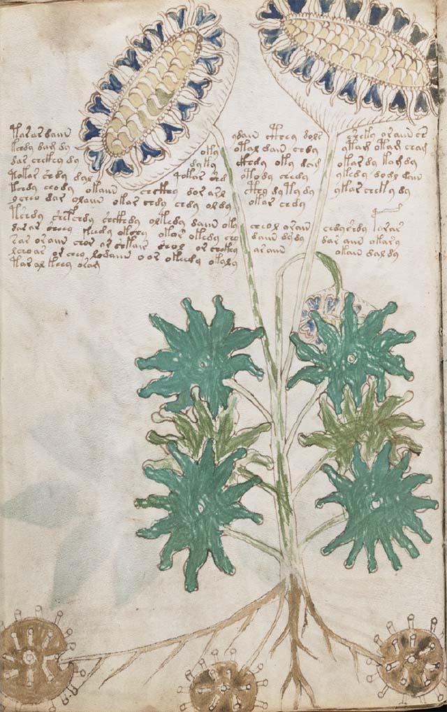 未確認植物のページの例