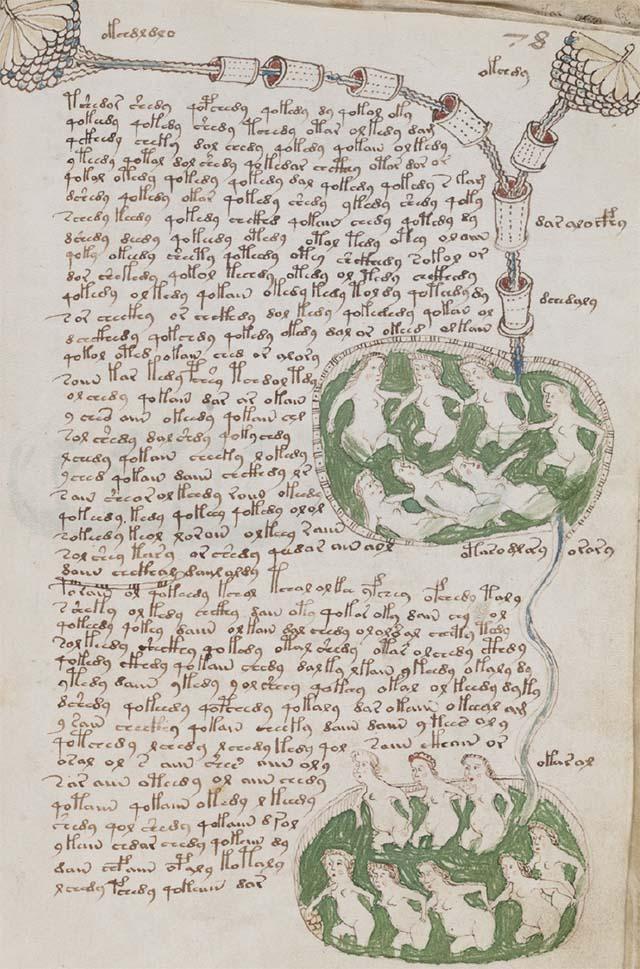 生物学のページの例