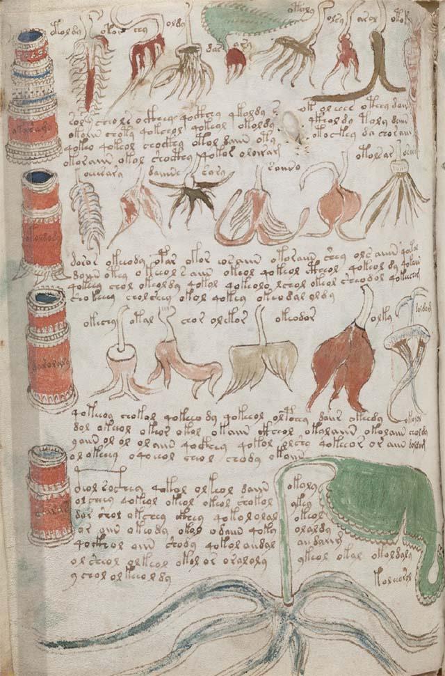 薬草のページの例